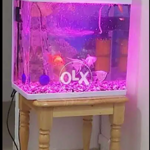 8 fishes with tank